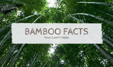 Bamboo: Is It For You?
