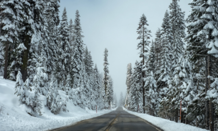 Your Environmentally Friendly Antifreeze Questions Answered