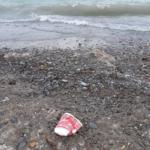 Do Environmentally Friendly Disposable Cups Exist?